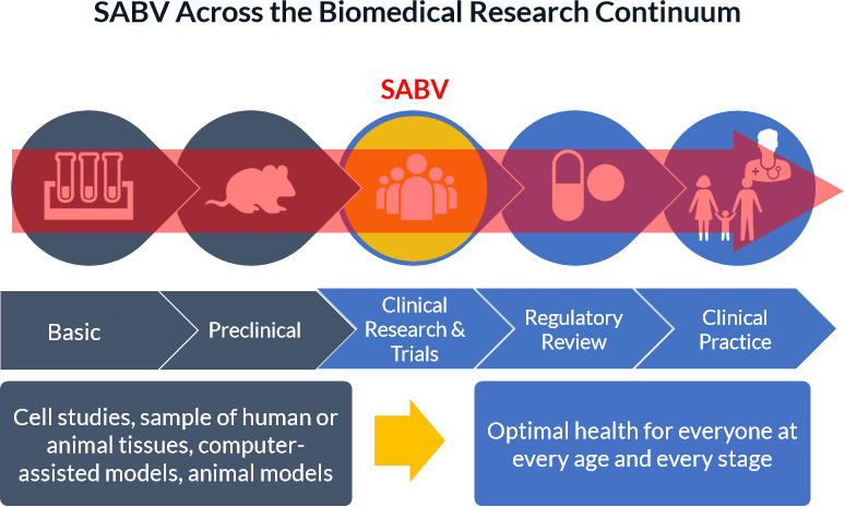 ": the infographic is titled ""Integrating SABV across the Biomedical Research Continuum."" It contains a flowchart in the shape of an arrow with the following 5 sections: Basic, Preclinical, Clinical Research & Trials, Regulatory Review, and Clinical Practice. Underneath the flowchart is a box reading ""Cell studies, sample of human or animal tissues, computer-assisted models, animal models"" with an arrow pointing to another box reading ""Optimal health for everyone at every age and every stage"""