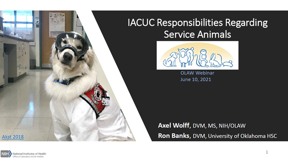 graphic promoting webinar with a dog in lab goggles